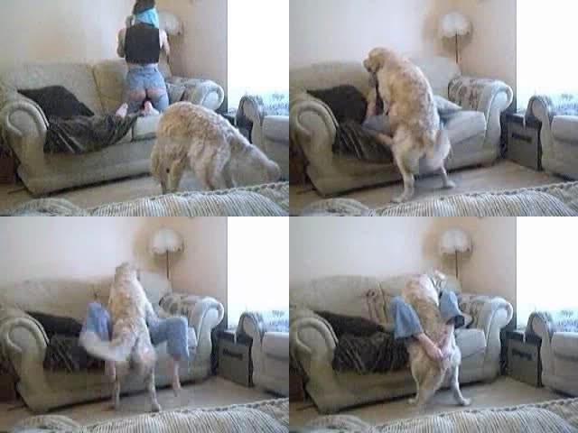 200499371 0873 ztub girl witn dog - Girl Witn Dog - ZooSex Tube