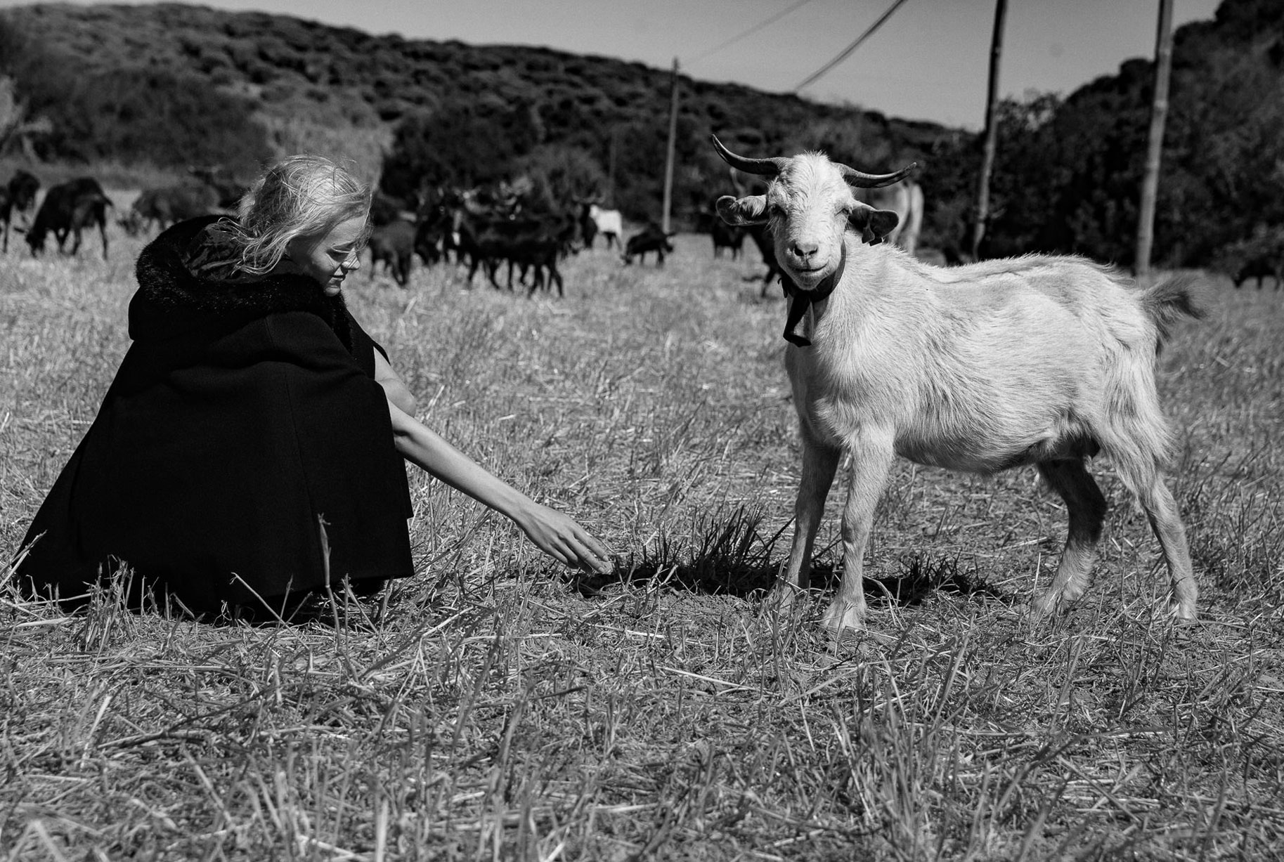 Яна на поле с пасущимися козлами и коровами / фото 03