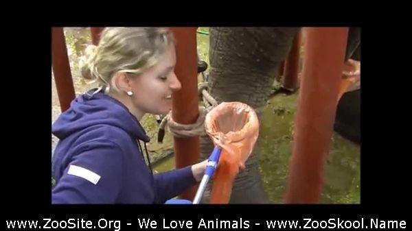 202081587 0210 fun elephant semen collection - Elephant Semen Collection