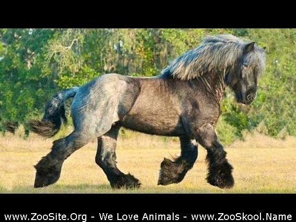 202081615 0220 fun sexy horse cute and funny horse videos compilation cute moment 30 - Sexy Horse! Cute And Funny Horse Videos Compilation Cute Moment 30