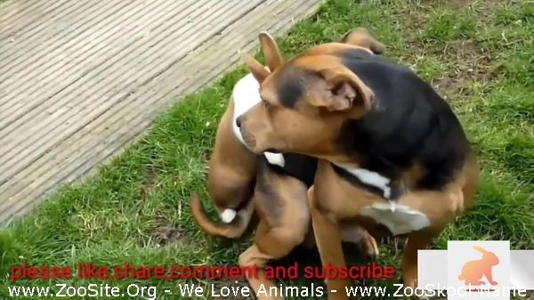 202081657 0228 fun dog mating compilation animal sex hd mp4 - Dog Mating Compilation+Animal Sex Hd Mp4