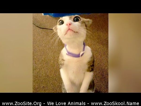202081716 0238 fun take your time to relieve stress and laugh hard   the funniest animals - Take Your Time To Relieve Stress And Laugh Hard - The Funniest Animals