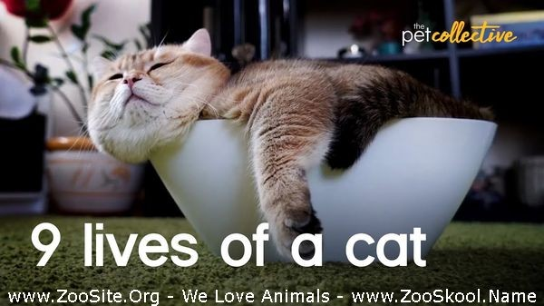 202081747 0241 fun the amazing adorable and lazy 9 lives of cats - The Amazing, Adorable And Lazy 9 Lives Of Cats
