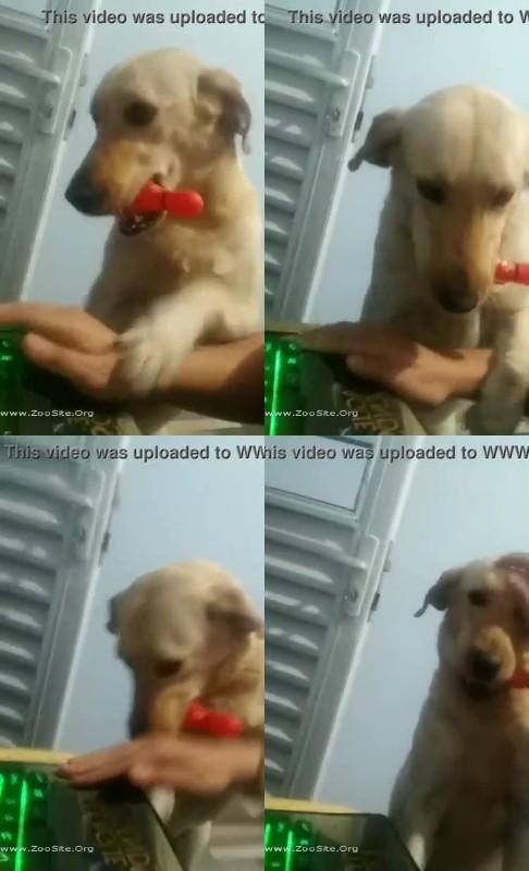 202081756 0242 fun cachorro implorando para que seu dono saia de joguinho e va transar - Cachorro Implorando Para Que Seu Dono Saia De Joguinho E Va Transar