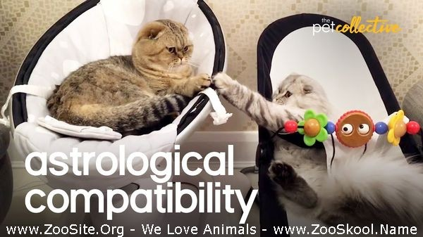202081807 0253 fun the worlds most compatible pets which zodiac sign is your pet - The World's Most Compatible Pets Which Zodiac Sign Is Your Pet
