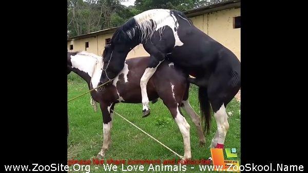 202081850 0264 fun big horse mating 3 animal sex compilation she was sick but the male was - Big Horse Mating 3 Animal Sex Compilation She Was Sick But The Male Was So Horney