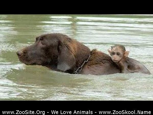 202081863 0268 fun unbelievable animals that saved and protected other animals - Unbelievable Animals That Saved And Protected Other Animals