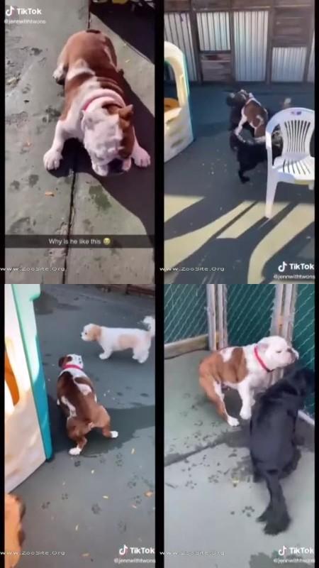 202081889 0275 fun im panchos dog - Im Panchos Dog