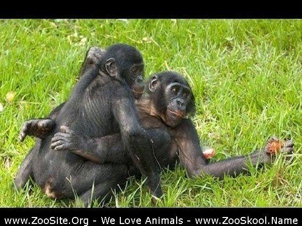 202081905 0282 fun animals mating compilation 2020   funny animals   animals breeding  fun - Animals Mating Compilation 2020 - Funny Animals - Animals Breeding , Funny Videos