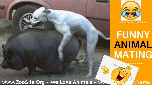 202081925 0288 fun animal mating compilation 2020 - Animal Mating Compilation 2020
