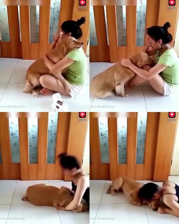 202081939 0290 fun dog - Dog