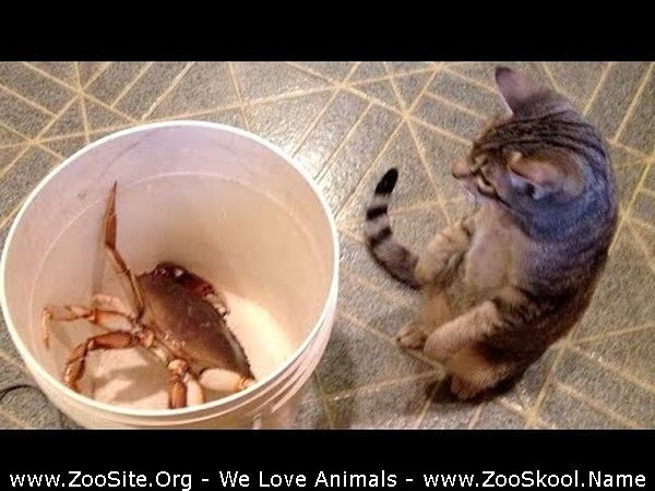 202081943 0292 fun youll laugh for sure   best funny animals - You'll Laugh For Sure! - Best Funny Animals