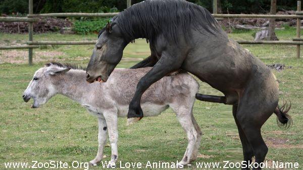 202082256 0165 fun horse mating donkey   donkeys breeding   animals mating compilation - Horse Mating Donkey - Donkeys Breeding - Animals Mating Compilation