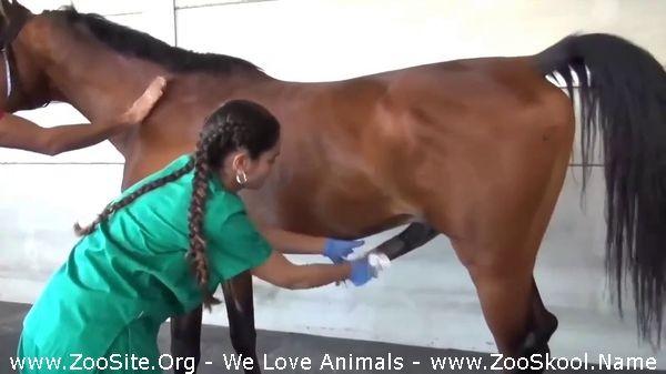 202082283 0171 fun horse and girl matting with big penis horse - Horse And Girl Matting With Big Penis Horse
