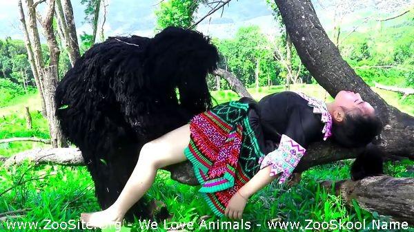 202082291 0174 fun gorillas catch girl in forest wild animals - Gorillas Catch Girl In Forest Wild Animals