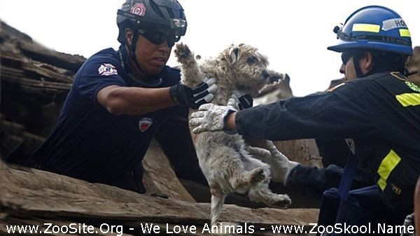 202082318 0181 fun most touching animal rescues  thanks the unsung heroes - Most Touching Animal Rescues  Thanks The Unsung Heroes
