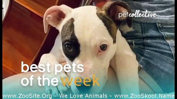 202082329 0184 fun music loving dog best pets of the week - Music Loving Dog Best Pets Of The Week