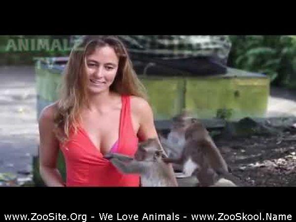 202082333 0186 fun funny monkeys play with sexy girls   monkey plays with hot girl - Funny Monkeys Play With Sexy Girls - Monkey Plays With Hot Girl