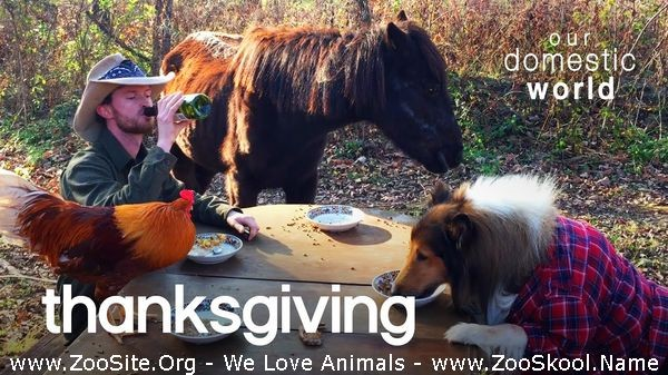 202082357 0193 fun pets celebrate thanksgiving  our domestic world - Pets Celebrate Thanksgiving  Our Domestic World