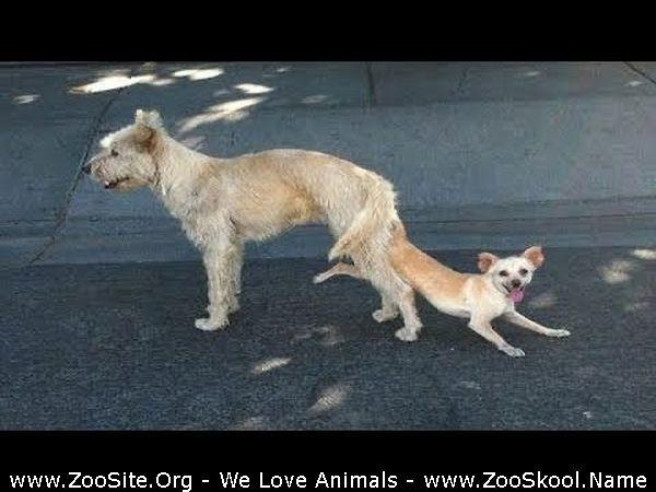 202082363 0195 fun funny animal mating compilation - Funny Animal Mating Compilation