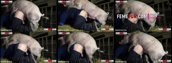 Femefun Woman Having Sex With A Pig In Farm Porn - Animal Sex Club